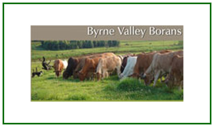 Byrne Valley Borans